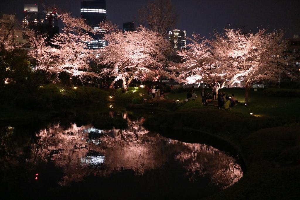 六本木毛利公園の夜桜