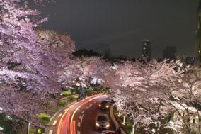 東京ミッドタウンの夜桜