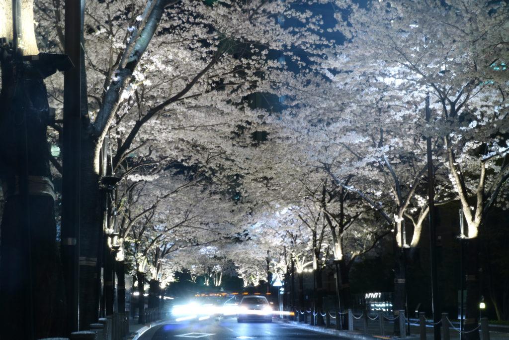 六本木アークヒルズの夜桜ライトアップ