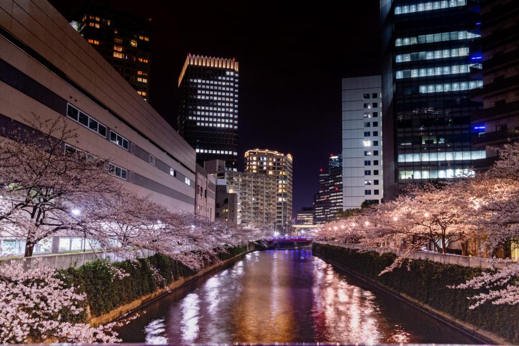五反田の目黒川沿い夜桜