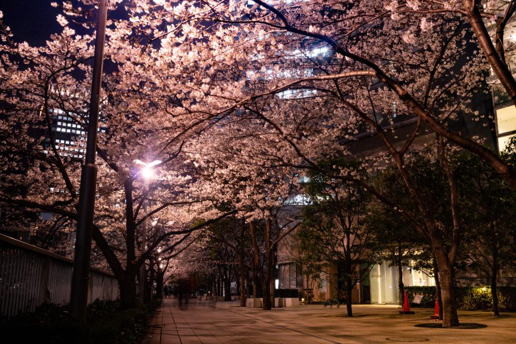 五反田の夜桜ライトアップの様子