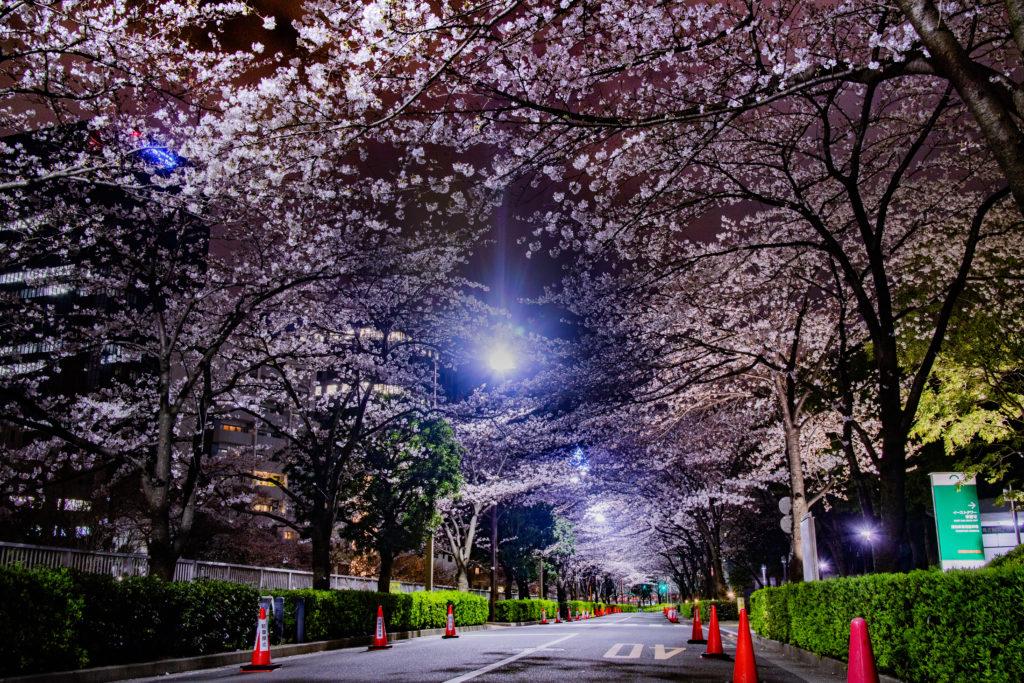 大崎駅付近の桜ライトアップの様子