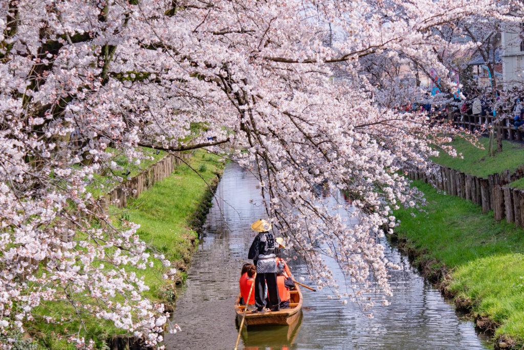 川越新河岸の桜と舟下り