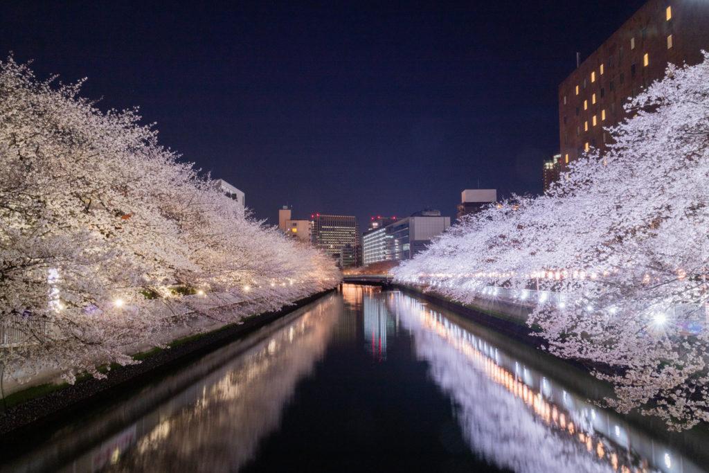 門前仲町夜桜ライトアップ