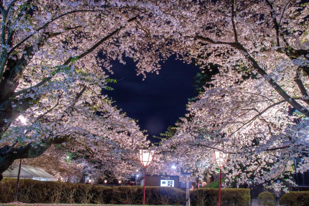弘前ハートの形の桜