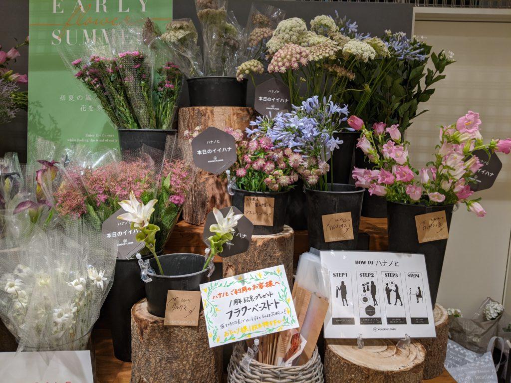 お花のサブスクリプション「ハナノヒ」で選べるお花